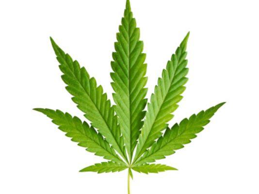 635961444810294824-marijuana